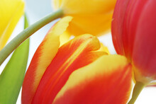 Bouquet With Red And Yellow Tulips Close Up