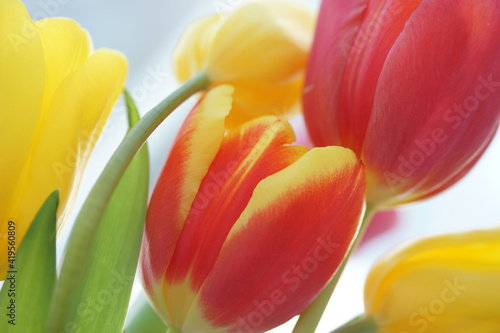 Fototapety, obrazy: Bouquet with red and yellow tulips close up