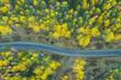Asfaltowa droga przez iglasty las. Zdjęcie z drona.