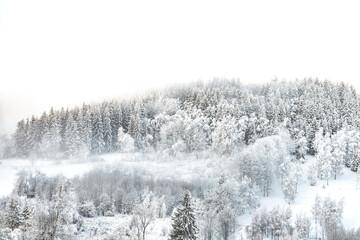 zima las góry śnieg