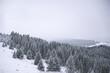zima góry las