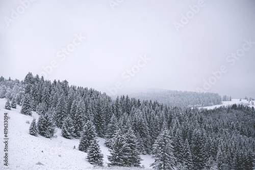 Fototapeta zima góry las obraz
