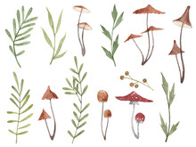 Collection Of Watercolor Forest Plants And Mushrooms