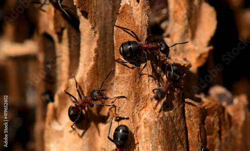 ants in the anthill