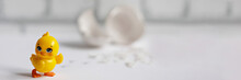 White Egg Shell Of A Broken Chicken Egg With Fragments And A Hatched Chicken Isolated. Easter.Banner