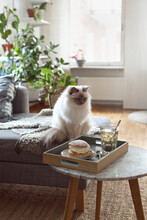 Cat Next To Brick On Marble Table With Swedish Dessert Semla