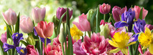 Decorative Panorama Of Spring Flowers In Row On The Green Background