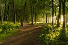 Las O Zachodzie