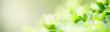 Closeup of green nature leaf on blurred greenery background in garden with bokeh and copy space using as background cover page concept.