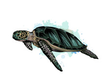 Sea Turtle From A Splash Of Watercolor, Colored Drawing, Realistic. Vector Illustration Of Paints