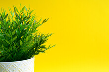 Green Ornamental Plant On A Yellow Background