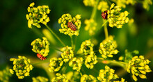 Insects On A Plant On A Green Background