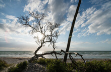 Germany, Darss, Weststrand Sandy Beach With Trees At Sunset