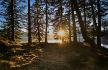 Setting Sun Shining Through Trees On Lakeshore, Lake Walchensee, Bavaria, Germany