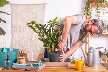 Man Removing Zamioculcas Zamiifolia Plant From Flower Pot While Standing At Home