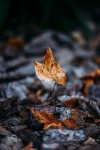 Dry Leaf Balancing On Stones