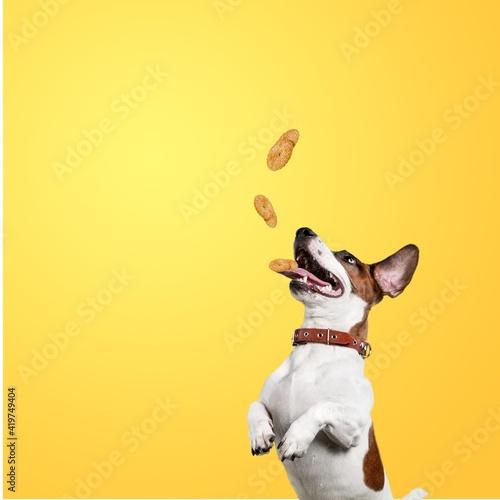 Leinwand Poster Dog.