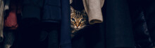 Funny Scared Tabby Pet Cat Hiding In Clothes At Closet. Cute Adorable Surprised Fluffy Hairy Striped Domestic Animal With Green Eyes Sheltered In A Wardrobe. Web Banner Header.
