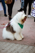 Protest Dog On Street With Freen Collar