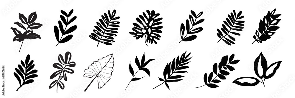 Fototapeta Tropical exotic leaves hand drawn vector set. Black silhouettes of palm leaves and herbs leaves isolated on white background.