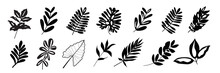 Tropical Exotic Leaves Hand Drawn Vector Set. Black Silhouettes Of Palm Leaves And Herbs Leaves Isolated On White Background.