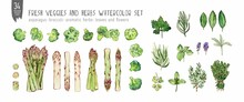 Watercolor And Ink Set Of Aromatic Herbs, Asparagus And Broccoli. Colorfull Set For Design Textile, Wallpapers, Print And Banners.