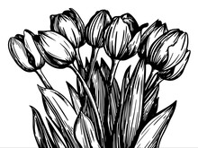 Vector Black And White Illustration Of A Large Bouquet Of Tulips In A Graphic Style On A Transparent Background. For Festive Decor.