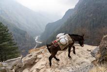 Mule Train In The Himalayan Mountains