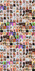 Stylish adorable dogs and cats posing. Cute pets happy. The different purebred puppies and cats. Art collage isolated on multicolored studio background. Front view, modern design. Collage.