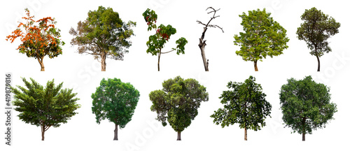isolated tree green set is located on a white background Fotobehang