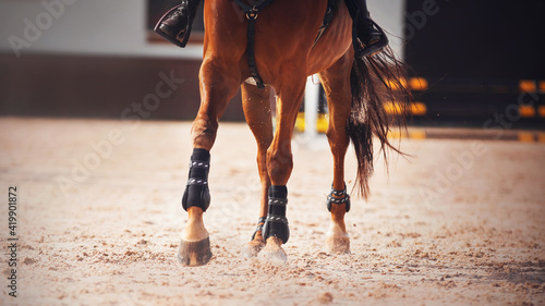 The legs of a sorrel horse with long tail, treading on the sand in the arena with its hooves and kicking up dust with them Fotobehang