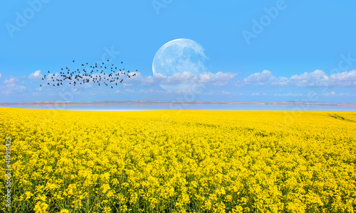 Fotografie, Obraz Yellow mustard field landscape industry of agriculture with full moon - Germany