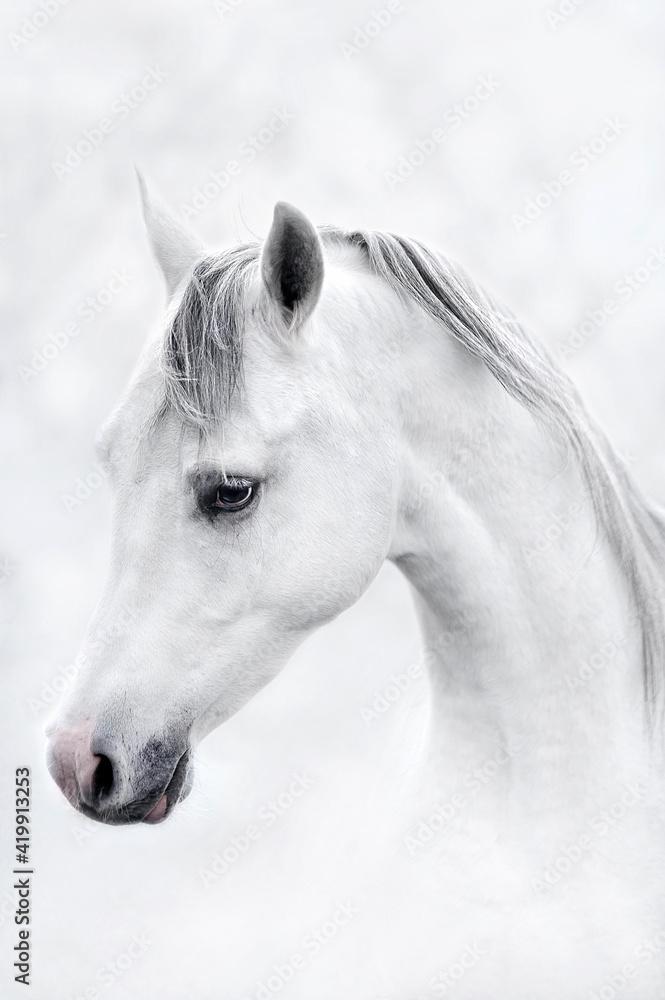 Fototapeta portret konia