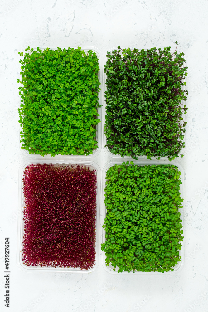 Fototapeta Fresh organic microgreens in a plastic container on a white background. Micro greens. Vegan and healthy food concept. View from above.