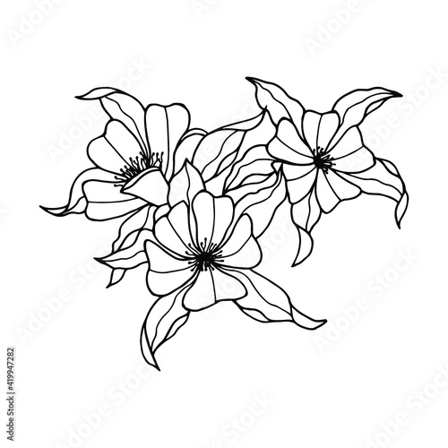 Canvas aquilegia flower . Vector stock illustration eps10. Hand drawing