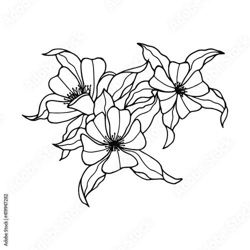 Fotografiet aquilegia flower . Vector stock illustration eps10. Hand drawing