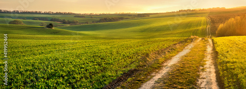 Fotografia Green waves of wheat field sown with a line with a dirt road in the evening