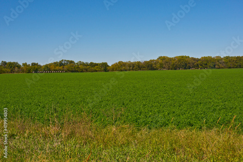 Photo USA, Minnesota, Kansas, Minneapolis, Soybean Field and Distant Rolled Haystacks
