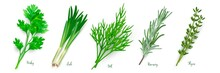 Green Herbs Set On White Background. Thyme, Rosemary, Parsley, Dill, Leek Spices Vector Illustration. Herbal Seasoning Ingredients For Cooking. Healthy Cuisine Condiments