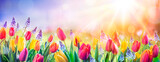 Fototapeta Tulipany - Abstract Defocused Spring Background - Tulips And Hyacinth Flowers In Sunny Field