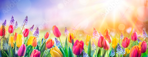 Canvas Print Abstract Defocused Spring Background - Tulips And Hyacinth Flowers In Sunny Fiel