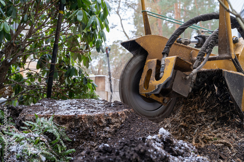 Fotografie, Obraz Tree stump removing process with yellow stump grinder