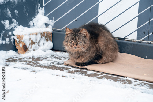 ginger cat sits on a cardboard box at the door of the house Wallpaper Mural