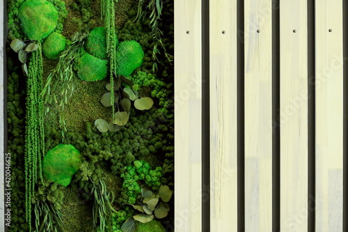 Fotografie, Obraz background of green moss on the wall in the form of a panel in the interior, the