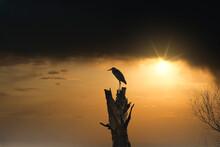 Eine Siluette Von Einen Graureiher Und Einen Toten Baum