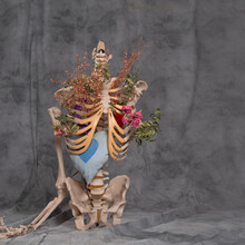 Human Skeleton On A Gray Background With Flowers Inside,