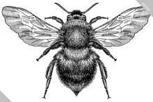 Engrave Isolated Bumblebee Hand Drawn Graphic Illustration