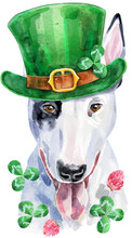 Watercolor Portrait Of Bull Terrier. St Patricks Day Lucky Dog