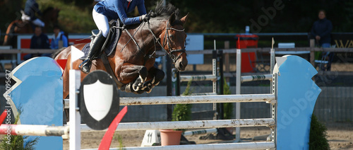 Fotografie, Obraz Jumping horse in cutout with rider while jumping over an obstacle from left to right