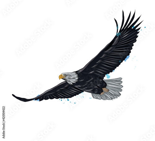 Valokuvatapetti Flying bald eagle from a splash of watercolor, colored drawing, realistic